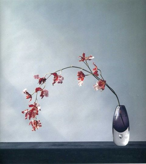 robert mapplethorpe_1